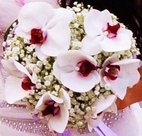 http://ierioggiincucina.myblog.it/album/matrimonio-di-ely-e-walt/2077301000.JPG