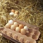 pasqua uova