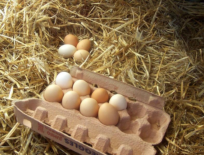 L'uovo in cucina