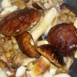 fagiano con funghi  porcini