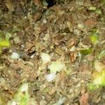 frittata bollito (2)