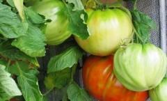 Marmellata che costa niente (con pomidoro acerbi) Petronilla