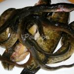 riso anguilla